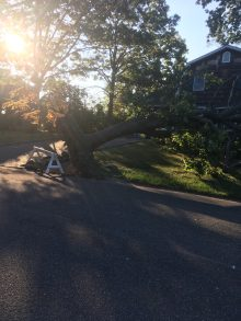 picture of uprooted tree on Long Island, NY in the aftermath of tropical storm Isaias August 2020