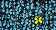 image depicting a special butterfly standing out in a crowd much like a power user in a crowd of software end users